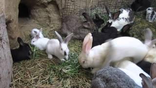 Кролики в яме 13.04.2016