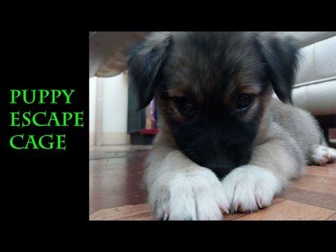 Puppy Escapes Cage