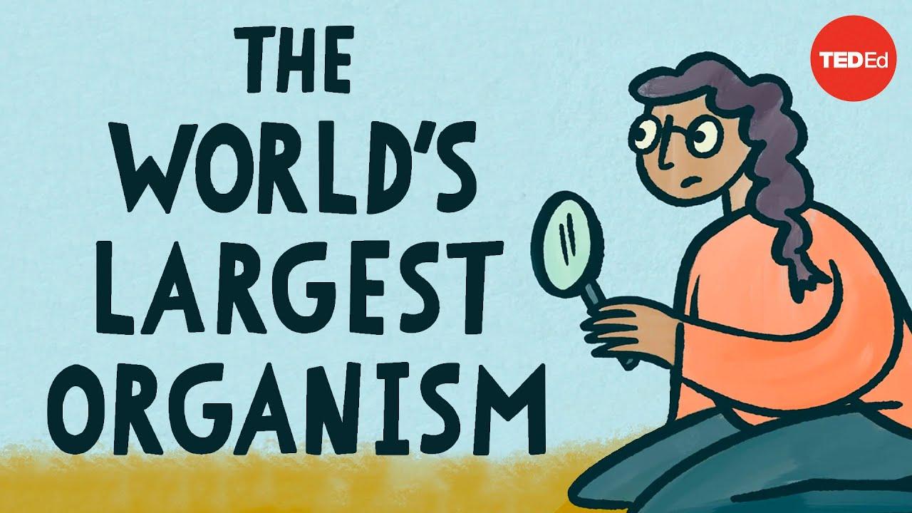 The world's largest organism - Alex Rosenthal