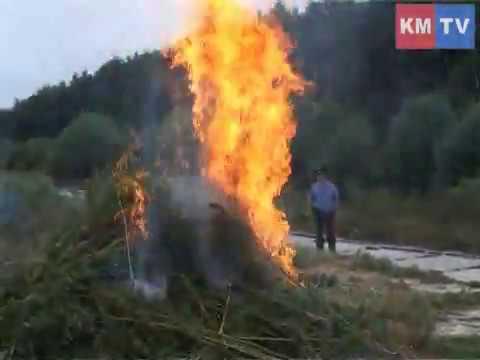 В Ленинском районе сожжено три гектара конопли