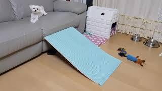 강아지 계단(비용 만원…