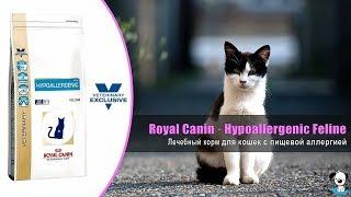 Лечебный корм для кошек при пищевой аллергии · Royal Canin Hypoallergenic Feline