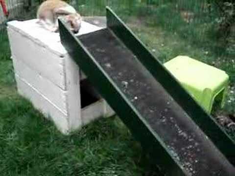 Konijntjes Dopie en Doortje, spelen met kitten Jaike!