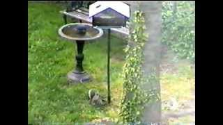 Squirrel-off Solar Powered Squirrel Proof Bird Feeder, Feeds More Birds