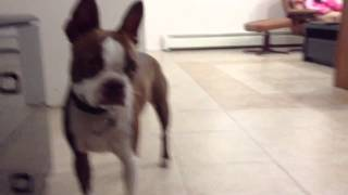 How To Train Your Dog To Shake A Paw!