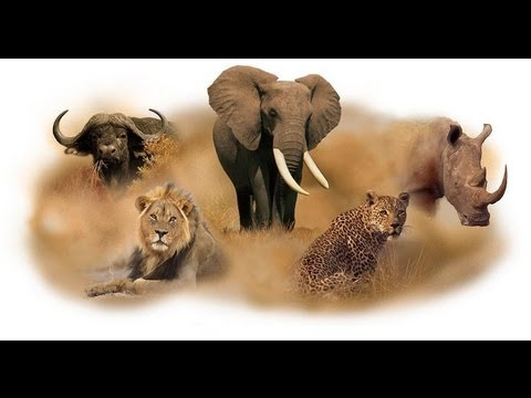 Pictures of the big 5 animals in south africa