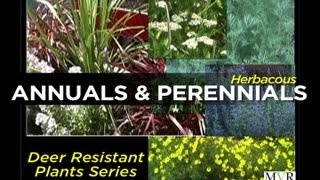 Herbaceous Annuals & Perennials - Episode 2 Deer Resistant Plants (drp) Series