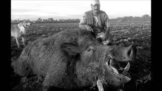 Chasse: Les Sangliers de Tunisie / Wild Boar Hunt in Tunisia