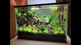 BETTA WITH RED CHERRY SHRIMP?! My Nano Planted Aquascape!