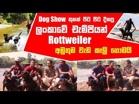 Dog Show තුනක් පිට පිට දිනපු ලංකාවේ චැම්පියන් Rottweiler | Pet Talk