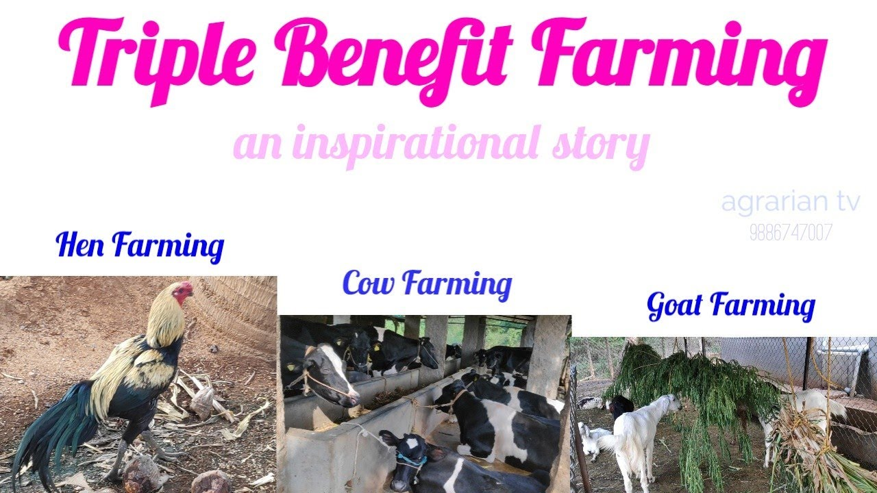 || Cow Farming 🐄 || Hen Farming🐓 || Goat Farming🐐 || Triple Benefits ||