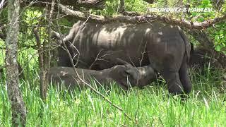 Uganda, górskie goryle i nosorożce. Podróże Pawła Krzyka, film UHD-4k