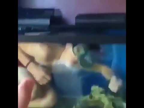 Get Out of My Fishtank! (Original)Aquaman 2 - The lost tribe of the aquarium sequel