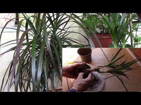 Вы купили растение!   Что необходимо сделать с растением?!