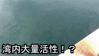 【驚】湾内活性魚だらけの状態でジグを入れてみたら・・・ thumbnail