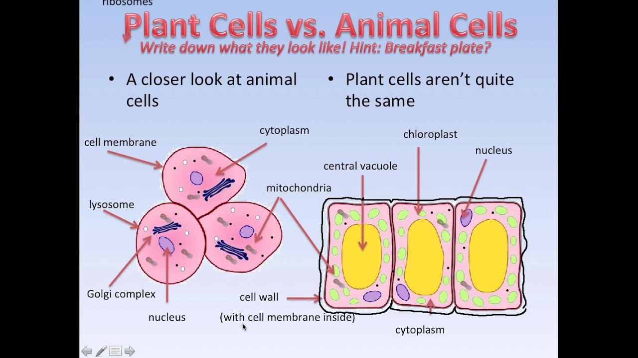 What cells are like (Grade 7) - YouTube