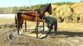 Как подковать лошадь. Станок для обработки копыт и подковке лошадей