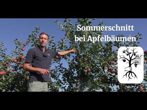 Gemeinsame Der Sommerschnitt beim Apfel leicht gemacht - Obstbäume im Sommer #JJ_85