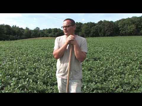 Ile de France : l'Agriculture BIO change d'échelle