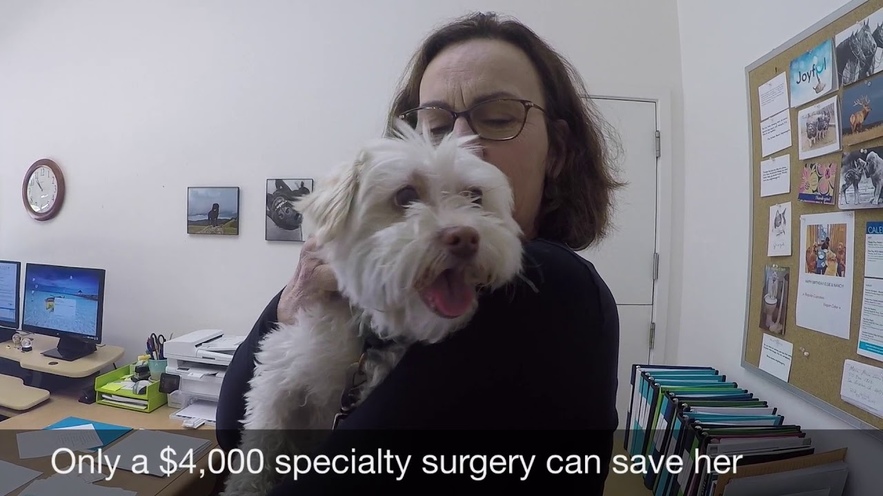 evita the friendly pup needs life saving surgery youtube rh youtube com hernia surgery for puppy surgery for puppies with hip dysplasia