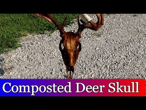 Composted Deer Skull Experiment