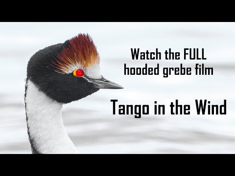 Tango in the Wind