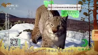 《秘境之眼》 雪豹/北豚尾猴/猞猁/豹 20201005| CCTV - YouTube