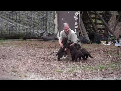 Chet's Boykin Spaniel Kennel  3 25 17