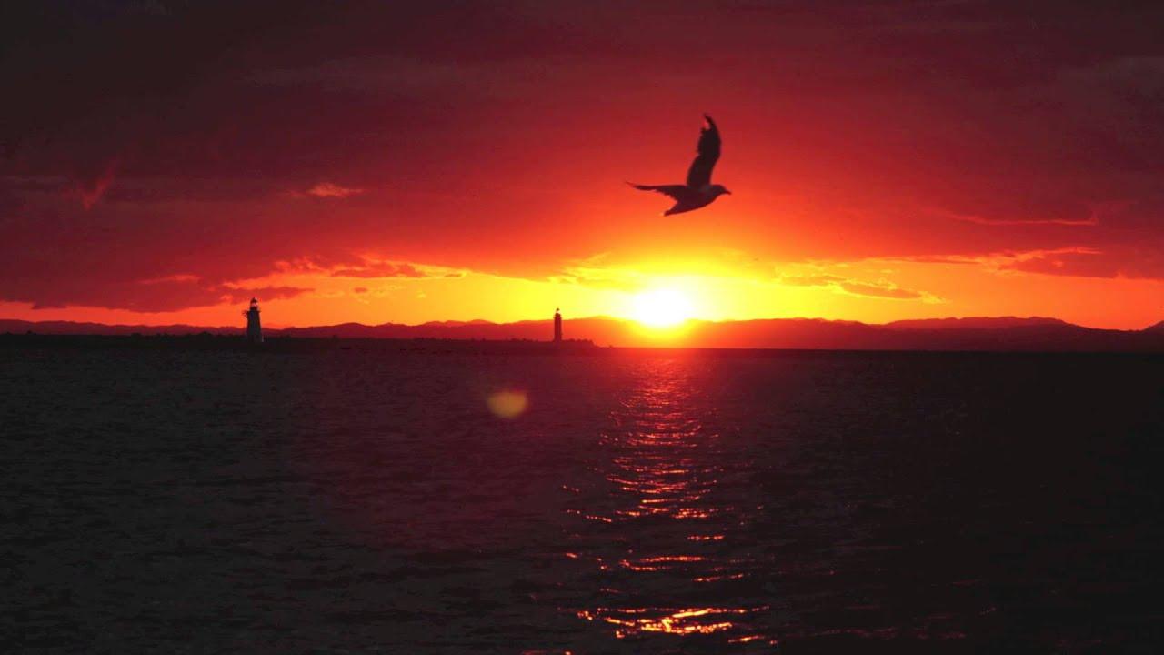 鳥と夕焼け