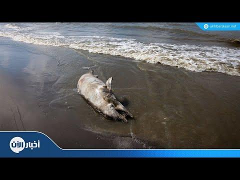 مكافأة ثمينة لمن يساعد في الكشف عن قاتل -الدلفين-  - نشر قبل 53 دقيقة