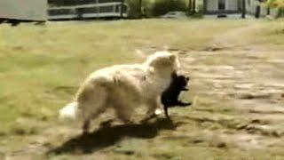 Кошка похитила у соседей щенков. Причина, по которой она это сделала, удивила всех