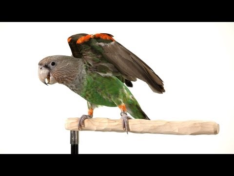 How to Clicker Train Your Parrot | Parrot Training
