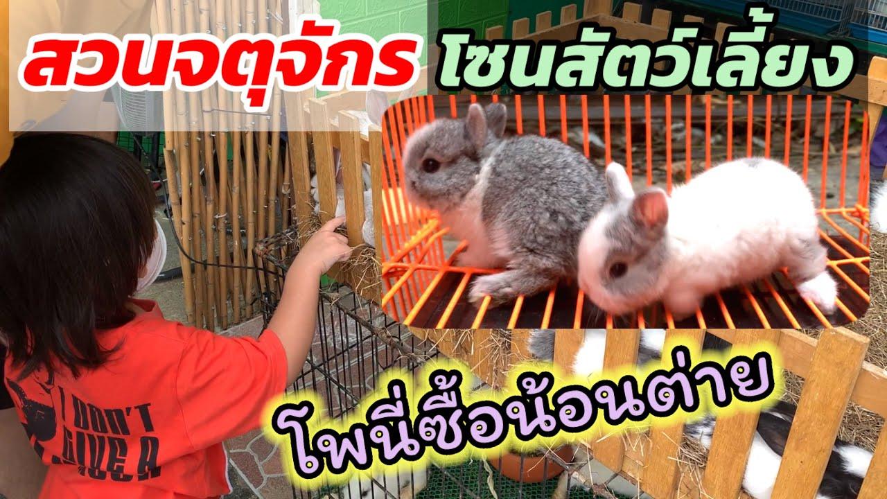 ซื้อกระต่ายตลาดจตุจักร โซนสัตว์เลี้ยงเปิดใหม่ โพนี่อยากดั้ย….