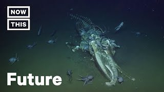 Scientists Freak Over Swarm of Octopuse...