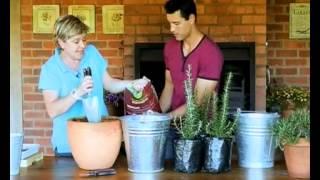 Gardening: Rosemary (07.02.2014)