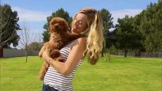 Wawe Ep2 2 West Coast Pet Care Centre's Dog Training