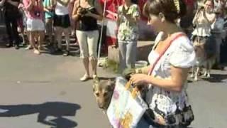 Дворянский титул 2011 - sampo.tv