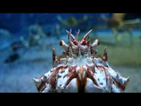 Osaka aquarium (2010)