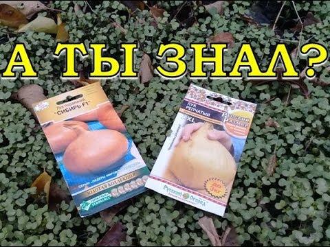 ЛУК ЧЕРНУШКА: сеем под зиму | выращивание | вырастить | чернушку | чернушки | чернушка | семена | сорта | куплю | лука | зиму