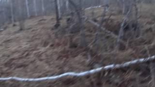Первая весенняя охота на вальдшнепа 2017