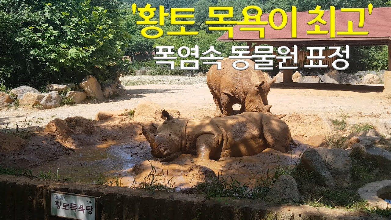 [VR] 수영하는 '불곰'·머드팩하는 '코뿔소'…폭염 속 동물원 표정