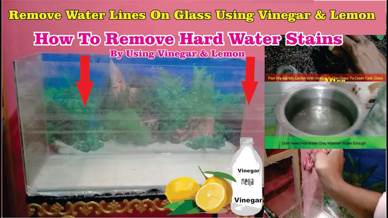 Removing Hard Water Stains From Aquarium How To Remove Calcium Build Up Or White Lines Youtube
