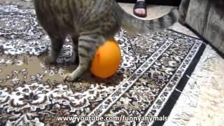 Кошка и шарик