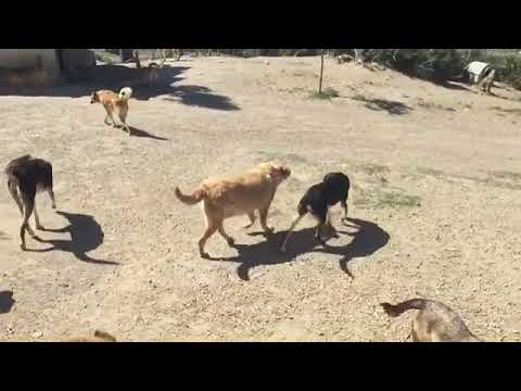 Happy SFT Dogs! Meet Our Sanctuary!