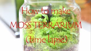 How To Make MOSS TERRARIUM (time Lapse)