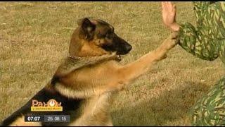 Какие породы собак лучше всего подходят для работы в спецслужбах