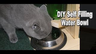 DIY Self Filling Water Bowl for Your Cat