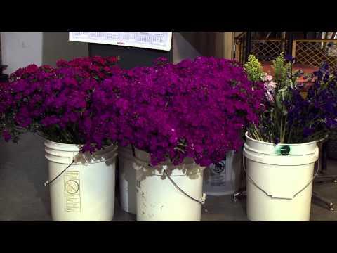 Growing Local Cut Flowers at Bear Creek Farms