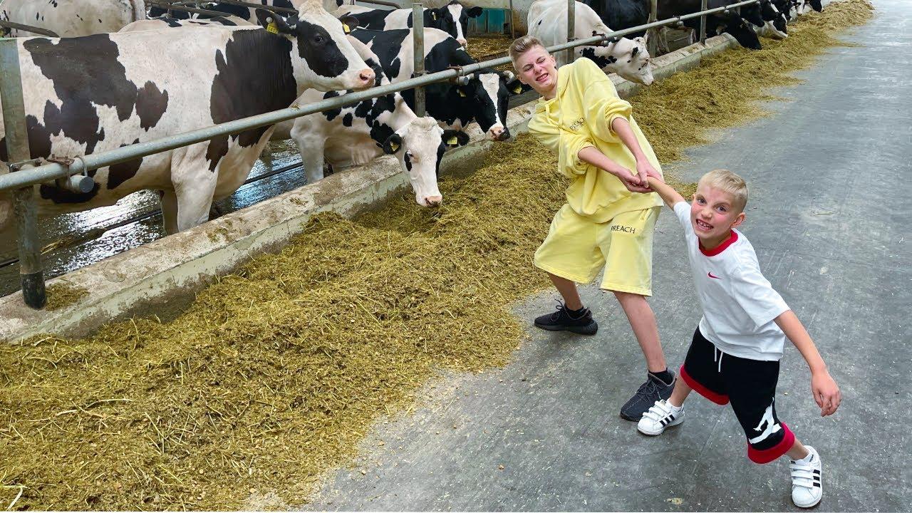 Педикюр и МАСАЖ для коров. Самая ЭЛИТНАЯ ферма!!!Такого ты точно НЕ ВИДЕЛ...