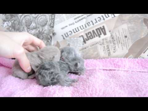 Дневник котят #2 | День 1 - Котята родились!